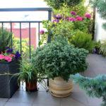 Die schönsten Balkonpflanzen